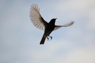 bird-816267_1280
